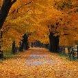 Herfst bibbbbers